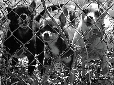 Chihuahua Digital Art - Encarcelados Chihuahuas by DigiArt Diaries by Vicky B Fuller