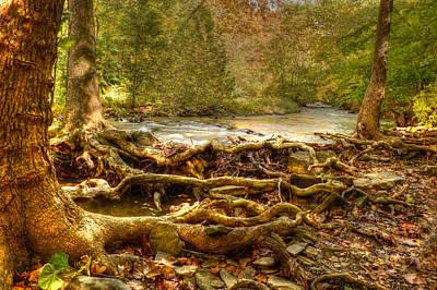 Tree Roots Digital Art - Enchanted Forest by Ann Bridges