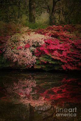 Azaleas Photograph - Enchanted Garden  by Jasna Buncic
