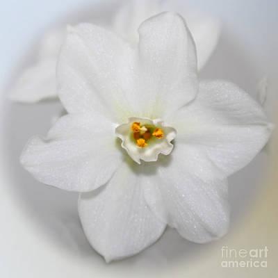 Charming Cottage Digital Art - Enchanted Winter Whites by Ella Kaye Dickey