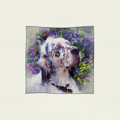 Breed Digital Art - English Setter. by ShabbyChic fine art Photography