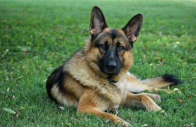 German Shepherd Dogs Photograph - Enjoying The Day by Sandy Keeton
