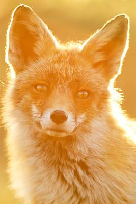 Enlightened Fox Print by Roeselien Raimond