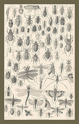 Beetle Drawing - Entomology by Captn Brown