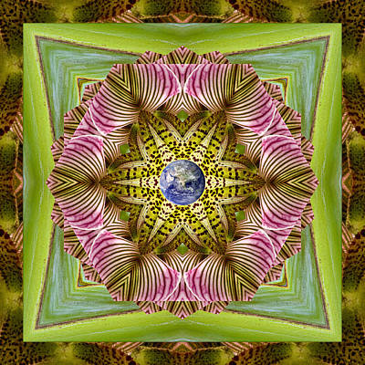Mandala Photograph - Epicenter by Bell And Todd