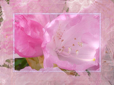 Stamen Digital Art - Essence Of Pink by Lori Seaman
