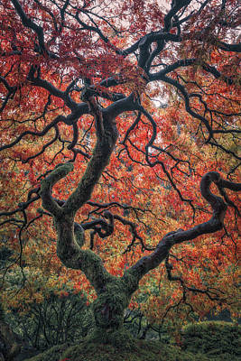 Ethereal Tree Print by Darren White