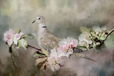 Dove Photograph - Eurasian Dove In The Garden by Jai Johnson