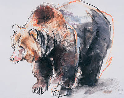 Bear Drawing - European Brown Bear by Mark Adlington
