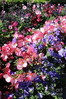 Blue Begonia Photograph - European City Garden by Carol Groenen