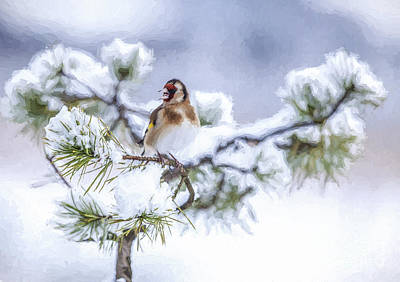 Finch Photograph - European Goldfinch Carduelis Carduelis In Snow by Liz Leyden
