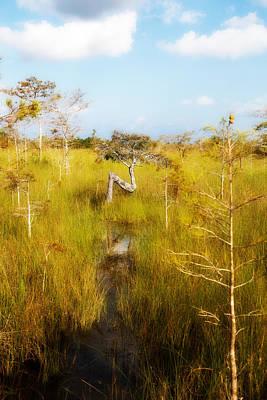 Wall Decor Photograph - Everglades Z Tree Dwarf Cypress by J Darrell Hutto