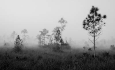 Slash Photograph - Everglades5106bw by Rudy Umans
