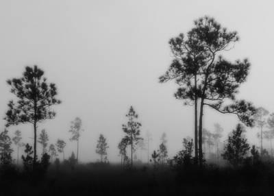 Slash Photograph - Everglades5111bw by Rudy Umans