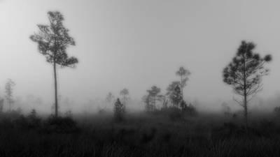 Slash Photograph - Everglades5119bw by Rudy Umans