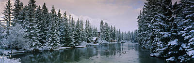 Reflections In River Photograph - Evergreen Trees Covered With Snow by Panoramic Images