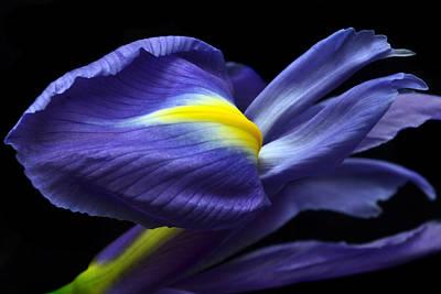 Evolving Iris. Original by Terence Davis