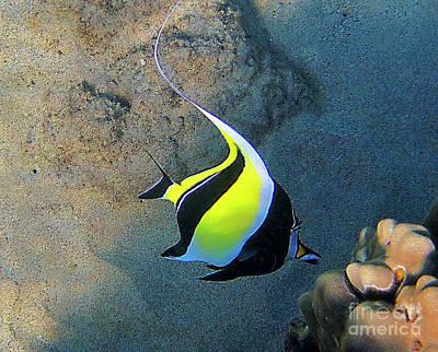 Exotic Reef Fish  Print by Bette Phelan