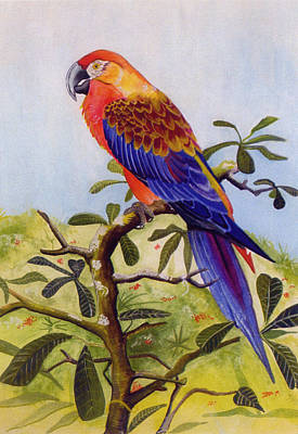 Extinct Birds The Macaw Or Parrot Print by Debbie McIntyre