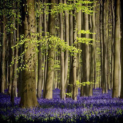 Forest Floor Photograph - Exuberance by Studio Yuki