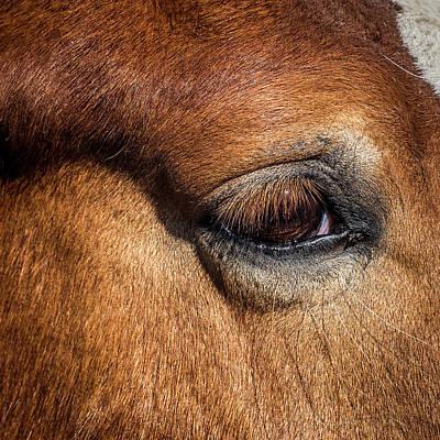 Eye Of The Horse Print by Paul Freidlund
