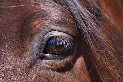 Eye See You Print by Michelle Wrighton