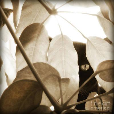 Black Cat Photograph - Eye Spy by Shevon Johnson