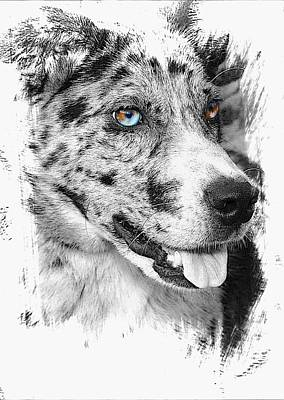 Catahoula Photograph - Eyes by Joyce Baldassarre