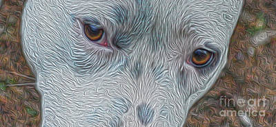 Photograph - Eyes Of Concern by Kim Pate