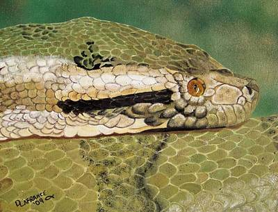 Burmese Python Painting - Eyes Of The Constrictor by Debbie LaFrance