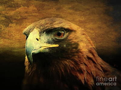 Red Tail Hawk Photograph - Eyes Of The Golden Hawk by Wingsdomain Art and Photography