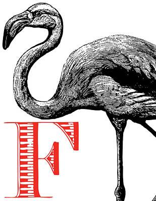 Flamingo Drawing - F Flamingo Print by Thomas Paul