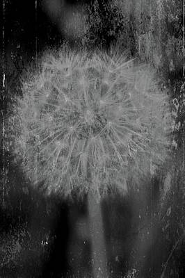 Fading Dream Photograph - Fade To Black by Odd Jeppesen