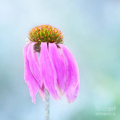 Hjbh Photograph - Faded Beauty by LHJB Photography