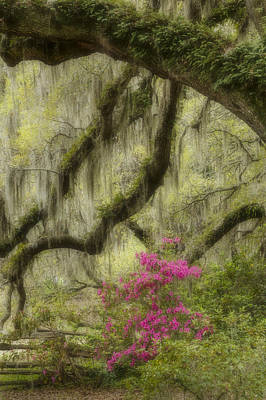 Azaleas Photograph - Faerie's Grove by Mike Lang