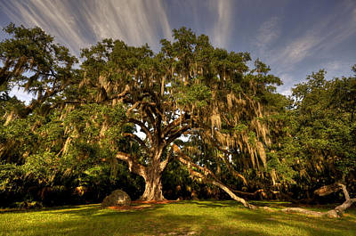 Fairchild Oak Print by Andrew Armstrong  -  Mad Lab Images