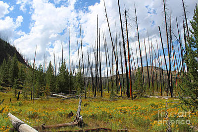 Yellowstone Photograph - Fairy Falls Mountains Iv by Kathleen Garman