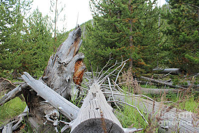 Trail Photograph - Fairy Falls Mountains Vi by Kathleen Garman