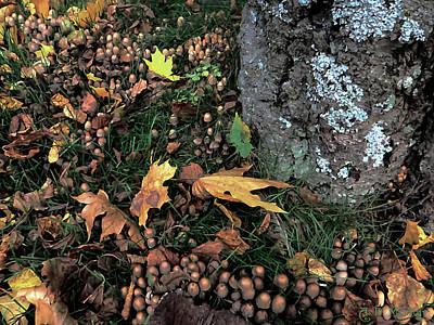 Fairies Photograph - Fairy Ring Around A Maple Tree by Celtic Artist Angela Dawn MacKay