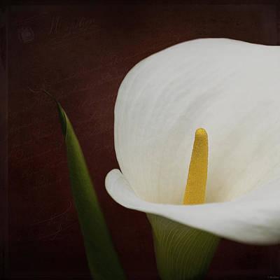 Faith - Flower Art Print by Jordan Blackstone