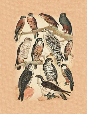 Buzzard Mixed Media - Falcons by Eric Kempson