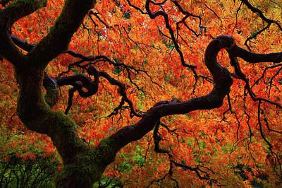 Fall Chaos Print by Darren White