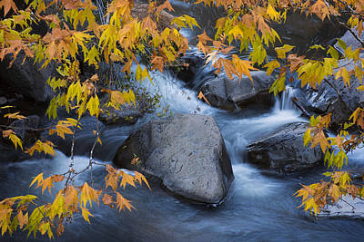 Fall Colors At Slide Rock Arizona Print by Dave Dilli