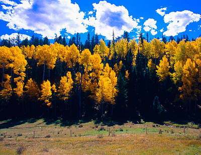 A2 Photograph - Fall Colors Las Trampas Nm by Troy Montemayor