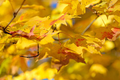 Leaf Photograph - Fall Colors by Sebastian Musial