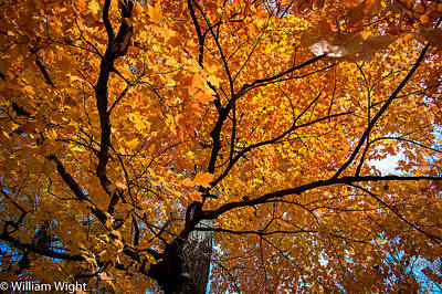 Fall Photograph - Fall Foliage 2 by William Wight
