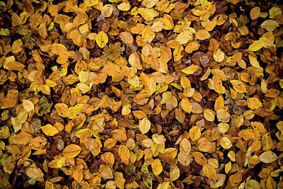Fall Foliage Nature Pattern Print by Frank Tschakert