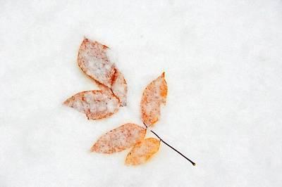Photograph - Fall Into Winter by Andrea Kollo