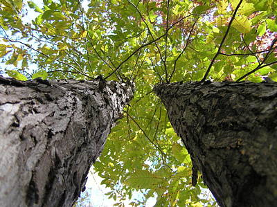 Fall Leaves Original by Dustin K Ryan