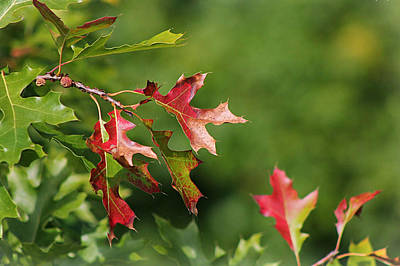 Butterfly Photograph - Fall Leaves by John Ohm